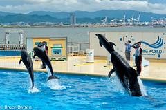 110814 Marine World-12.jpg (Bruce Batten) Tags: locations people trips occasions marineworld subjects fukuoka aquariums animals vertebrates mammals japan vacations fukuokaprefecture jp kyushu