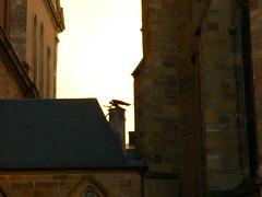 Engel (Jrg Paul Kaspari) Tags: angel und dom ange engel stpeter trier zwischen liebfrauenkirche
