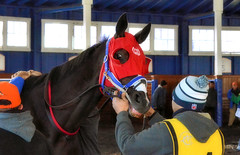 2015-12-19 (20) r6 #4 Hero's Notion (JLeeFleenor) Tags: photos photography md marylandracing laurelpark marylandhorseracing horses thoroughbreds equine equestrian cheval cavalo cavallo cavall caballo pferd paard perd hevonen hest hestur cal kon konj beygir capall ceffyl cuddy yarraman faras alogo soos kuda uma pfeerd koin حصان кон 马 häst άλογο סוס घोड़ा 馬 koń лошадь maryland