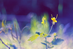 Bokeh-painted garden of flowers (Paulina_77) Tags: blue sunlight blur flower color green nature colors beauty leaves yellow vintage lens 50mm prime spring nikon colorful soft mood branch moody colours dof purple bright blossom bokeh outdoor vibrant background magic creative dream mother vivid illuminated depthoffield mount german ethereal m42 bloom dreamy shallow manual colourful elegant pentacon f18 sunlit delicate dreamlike tones magical daydream depth springtime selective blooming 50mm18 springlike focusing 5018 d90 playoflight illimination bloomy pentacon50mmf18 bokehlicious pentacon50mm nikond90 pentacon50mm18 pola77