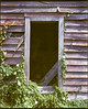 The forgotten cottage (thenorthernmonkey77) Tags: old house building abandoned 120 mamiya film architecture wooden cornfield cabin outdoor farm cottage ivy 6x7 agfa expired derelict expiredfilm rb67 lovefilm oncewashome xrs100