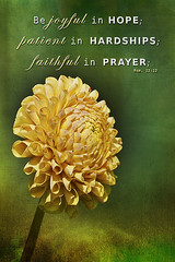 "Romans 12:12 (G. H. ""Jerry"" White) Tags: dahlia flower yellow textures bible romans verse inspirationj"