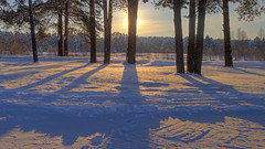 frosty shadowplay (Sergey S Ponomarev) Tags: park city winter light shadow snow cold texture nature forest sunrise canon garden landscape eos dawn woods frost russia north january natura neve paysage inverno pinetrees hdr paesaggio nord russie citta   kirov 2016  russland       vyatka 70d    sergeyponomarev  viatka  wjatka