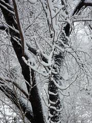 02-05-16_04 (AbbyB.) Tags: winter nj rainbowlake denville