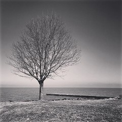 Can't get enough of that tree (imagesafari) Tags: lakeerie rockyriver project365 thattree rrpark instagram igersohio clevelandgram igerscleveland
