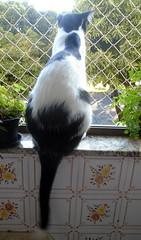 Namastê 02 - DSC02438 (Dona Minúcia) Tags: blackandwhite cute art window animal cat arte gato sentado janela seated fofo pretoebranco gracinha