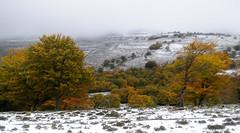 Moscadero (Paulo Etxeberria) Tags: autumn winter automne hiver otoo invierno udazkena negua urieta gorobel slvada moscadero