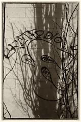 Pablo Picasso wannabe in the shadows (Joseph Austin) Tags: trees art outdoors graffiti shadows artistic graffito graff pablopicasso wallpaintings 124street pablopicassowannabe