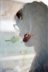 film swap (La fille renne) Tags: woman film nature water birds animals silhouette analog 35mm kodak doubleexposure ducks multipleexposure swap expired mx expiredfilm kodakgold200 topconrm300 filmswap 55mmf17 lafillerenne