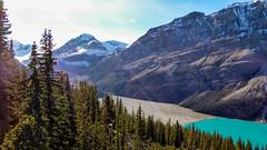 Peyto Lake (weber_sd) Tags: ca lake canada mountains alberta banffnationalpark peyto icefieldsparkway canadianrockies 2015 improvementdistrictno9