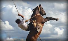 Entre las nubes (Eduardo Amorim) Tags: horses horse southamerica argentina criollo caballo cheval caballos sauce cavalos corrientes pferde cavalli cavallo cavalo gauchos pferd chevaux gaucho amricadosul gacho amriquedusud  gachos  sudamrica suramrica amricadelsur sdamerika crioulo caballoscriollos criollos jineteada  americadelsud gineteada crioulos cavalocrioulo americameridionale caballocriollo eduardoamorim cavaloscrioulos provinciadecorrientes corrientesprovince cavall