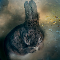 Hoping one day you'll make a dream last (Jeric Santiago) Tags: pet rabbit bunny animal conejo lapin hase kaninchen   compositephotography fineartsphotography winterrabbit