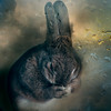 Hoping one day you'll make a dream last (Jeric Santiago) Tags: pet rabbit bunny animal conejo lapin hase kaninchen うさぎ 兎 compositephotography fineartsphotography winterrabbit