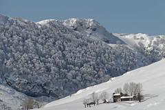 Entre nieve (Urugallu) Tags: luz sol canon lago agua flickr arboles nieve asturias bosque cielo invierno montaa marzo cabaa nevado calor picosdeeuropa ladera lagosdecovadonga 70d joserodriguez urugallu