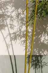 (Chaoqi Xu) Tags: china city travel plant nature architecture canon photography hongkong eos photo foto shanghai monumento chinese beijing culture taiwan natura bamboo 5d oriente taipei    fotografia      viaggio  architettura cina cultura   xu citt  cinese orientale beni 2016     culturali  chaoqi