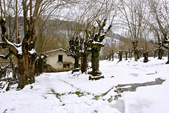 Lizarrak (joxelu.) Tags: winter naturaleza nature canon landscapes arboles nieve paisaje elurra navarra nafarroa negua