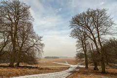 Fading Winter (Jakob Arnholtz) Tags: light landscape natuer arnholtz