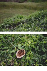 nature&stuff (ConcreteLies) Tags: flower green nature up grass yellow out outside outdoors weeds diptych close small walnut inside nut