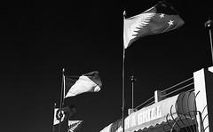 New Flag? (eddieddieddie) Tags: newzealand bw flags 80s agfa caffenolc 135format 35mmfilmscanningwellington
