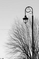 86/366 - Branches (burberi (detta Buf)) Tags: blackandwhite bw canada lamp project daily 365 bianco mercier nero biancoenero rami lampione 366 beuf chteauguay burberi captureyour365