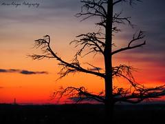 Sunset (Maria-Pelagea) Tags: sunset sky tree colors clouds finland helsinki olympus puu pilvet auringonlasku taivas vrit kelohonka mzuiko