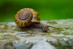 Snail crawls to high ground (sniggie) Tags: nature stairs forest kentucky snail sinkhole mammothcavenationalpark macrophotography mammothcavenp cedarspring