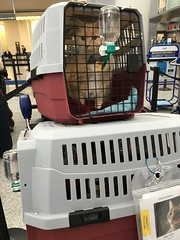 Norio's View of the Airport (sjrankin) Tags: sanfrancisco california cats animals northerncalifornia sfo edited sanfranciscoairport catcarriers 11april2016