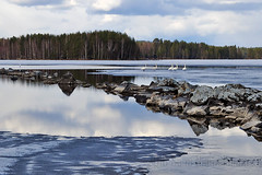 Spring In Finland (Sami Niemelinen (instagram: santtujns)) Tags: lake ice nature suomi finland landscape north maisema luonto jrvi j karjala hytiinen kontiolahti carelia pohjois puntarikoski hiknniemi