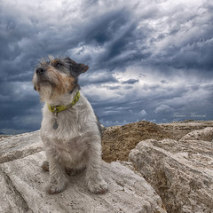 model Toffee (Franco Marconi) Tags: italien italy dog art cane digital photo model flickr italia gallery foto photographer sony photograph jackrussell toffee italie galleria photostream itaalia grottammare fotostream francomarconi 1234567890qwertyuiopasdfghjklzxcvbnm| dscrx100m4 sonyrx100iv