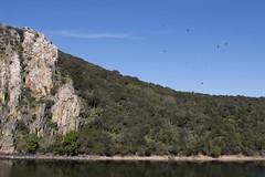 Portilla (ramosblancor) Tags: cliff naturaleza nature birds ro river landscape nationalpark paisaje aves vultures monfrage buitres parquenacional cortado extremdura mediterraneanforest titar montemediterrneo portilladeltitar