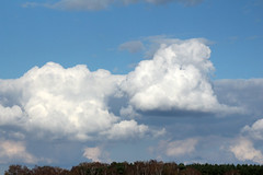 Clouds (NTG's pictures) Tags: suffolk rabbits lakenheath