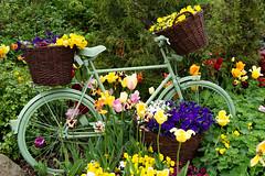 TH20150513A603082 (fotografie-heinrich) Tags: ostsee fahrrad zingst erdbeerhof