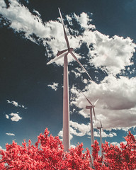DSC_6337-Edit.jpg (THE THER COLLECTION) Tags: california pink nature ir outside nikon outdoor infrared dreamy wilderness valentinesday nofilter infraredphotography d300ir wildbayarea