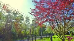 Zum Stau wm (Renate:) Tags: happy natur schild ironic coloured baum bunt frhling ironie frhlich