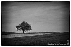 film noir (alamond) Tags: blackandwhite bw storm tree film monochrome analog canon is snapshot nostalgia 7d l lonely usm ef mkii markii 70300 brane llens f456 alamond zalar