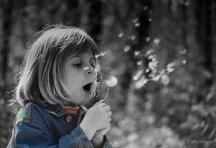 Bilitis. (sdupimages) Tags: film blackwhite fuji dandelion partial pissenlit 50mmf18 canonef bilitis partiel
