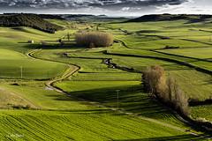 Peaflor de Hornija_Valladolid RED (Blanco Carlos) Tags: verde primavera rural natural valladolid amarillo pradera
