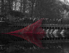 8100237 YSP Poppies on reflection B+W (Walks Walker) Tags: park uk light red england sculpture black building london tower st architecture tom night liverpool dark paul evening hall blood long exposure yorkshire country touch walker poppy poppies column piper lands swept hdr cummins seas colonnade bretton merseyside thewalkertouch