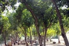 Jerusalem, Yad Vashem, Garten der Gerechten (palladio1580) Tags: israel jerusalem yadvashem gedenksttte