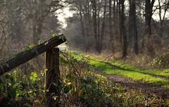 Green Way (Fearghl Nessbank) Tags: trees green way nikon greenway autofocus spiritofphotography nikonflickraward d5100