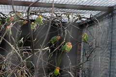 avifauna_301215_249 (Bellcaunion) Tags: park nature birds animals zoo vogels cage rijn avifauna alphen