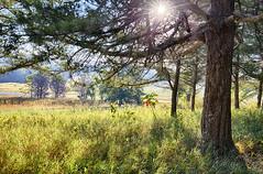 Good Morning Sunshine (Kansas Poetry (Patrick)) Tags: kansas flinthills tallgrassprairienationalpreserve patrickemerson patricklovesnancy