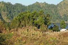 Gemseanbau in der Batur-Caldera; Bali, Indonesien (Chironius) Tags: trees bali tree indonesia rboles landwirtschaft boom arbres rbol albero bume arbre rvore baum trd indonesien batur aa