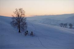 (And here fox was running).. (Kirill & K) Tags: winter mountain snow tree nature landscape evening twilight hill trace birch        bashkiria           bannoye southurals