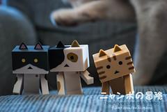 07 (= ann =) Tags: cat toy photostory yotsuba danbo danboard nyanboard