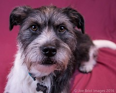 Gus (Dash68) Tags: family dogs february gus woodbury 2016 tamron1750