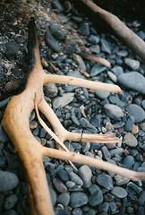 Charred Stick (Rachael.Robinson) Tags: winter canada color film 35mm island fire sticks bonfire fujifilm after charred campobello