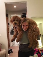 Shasta and Chewy's Lenny loves to be carried like a baby!!