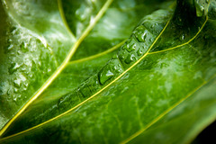 Our Tree (Our Wonderful Children) Tags: tree green water leaf naturallight droplet