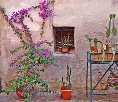 FINALBORGO - (Liguria) (cannuccia) Tags: windows landscape liguria paesaggi finestre finalborgo facciate 100commentgroup virgiliocompany